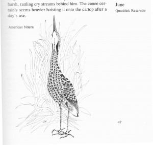 IMG bird book Bittern