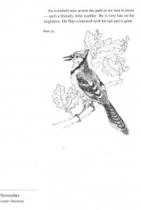 IMG bird book Blue Jay