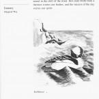 IMG bird book Bufflehead