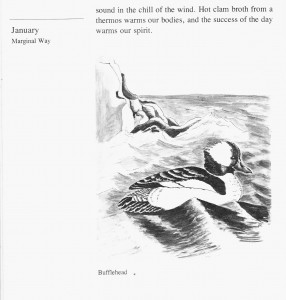 IMG bird book Bufflehead