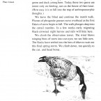 IMG bird book Canadian Goose
