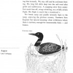 IMG bird book Common Loon
