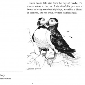 IMG bird book Common Puffins