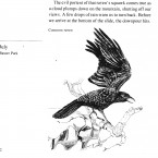 IMG bird book Common Raven