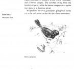 IMG bird book Dark-eyed Junco