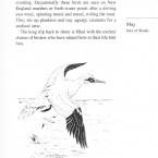 IMG bird book Gannet