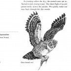 IMG bird book Great Horned Owl
