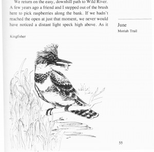 IMG bird book Kingfisher