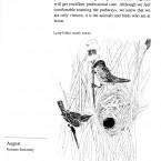IMG bird book Long-billed Marsh Wrens
