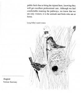 IMG bird book Long-billed Marsh Wrens