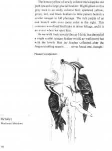 IMG bird book Pileated Woodpeckers
