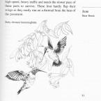 IMG bird book Ruby-thraoted Hummingbirds