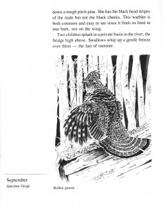 IMG bird book Ruffed Grouse