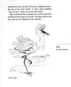 IMG bird book Snowy Egret